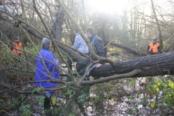Tree defenders near Bexhill, Dec 2012