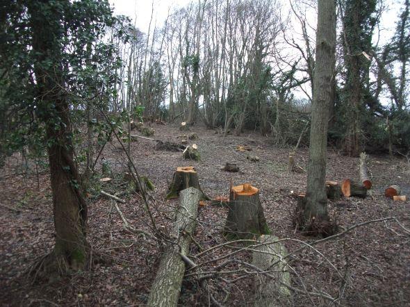 Copse destroyed near Glover´s Farm