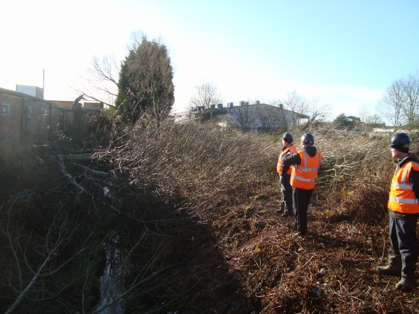 tree felling in bexhill