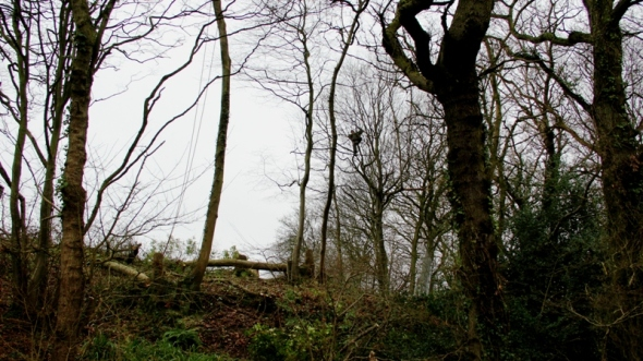 High in the trees in Combe Haven. Photo: Marta Lefler.