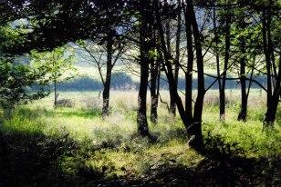 combe haven trees
