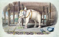 512px-Lord_White_Elephant
