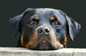 Dog-1373127384GhB